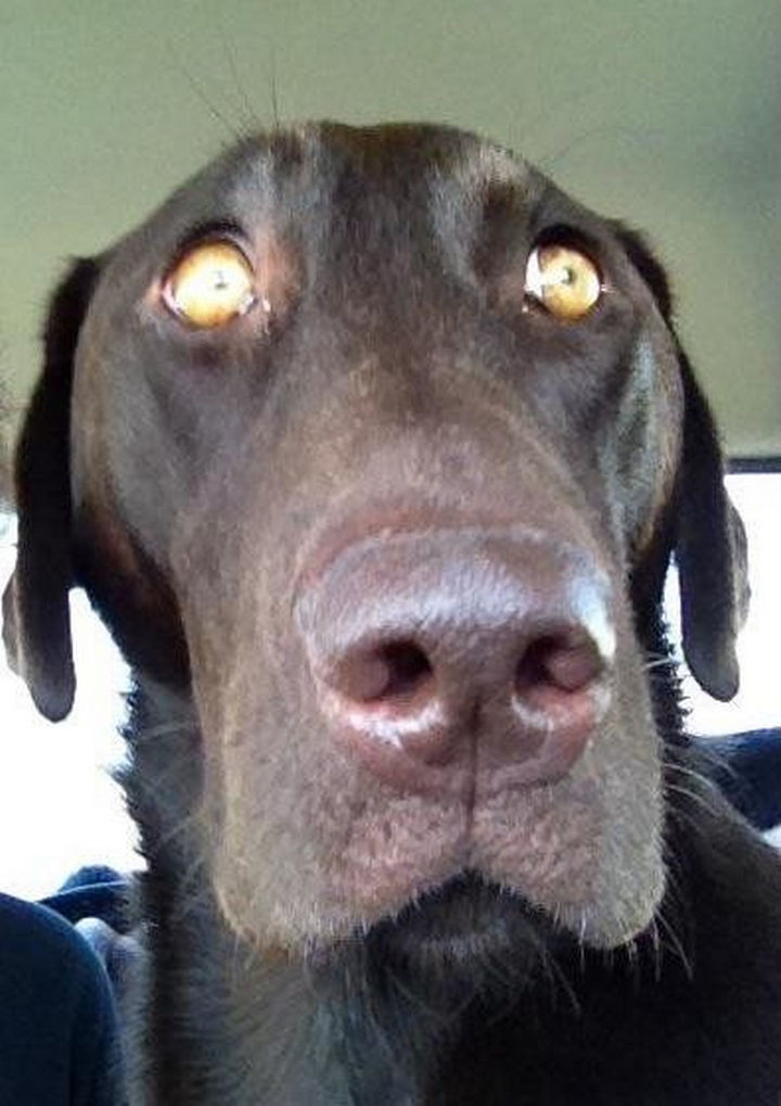 """28 Animals Going to the Vet - """"Ruh roh! This is not the way to the dog park?"""""""
