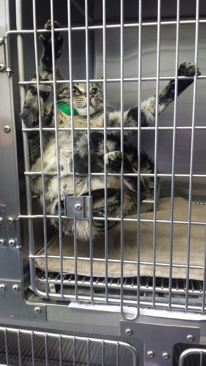 """28 Animals Going to the Vet - """"Wait till I get out of here!"""""""