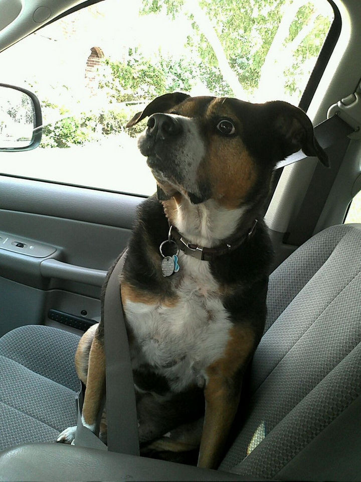 """28 Animals Going to the Vet - """"OMG, this is where the fun ends."""""""