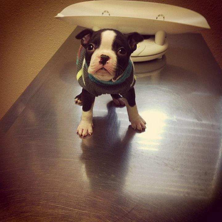 """28 Animals Going to the Vet - """"I feel so cold..."""""""