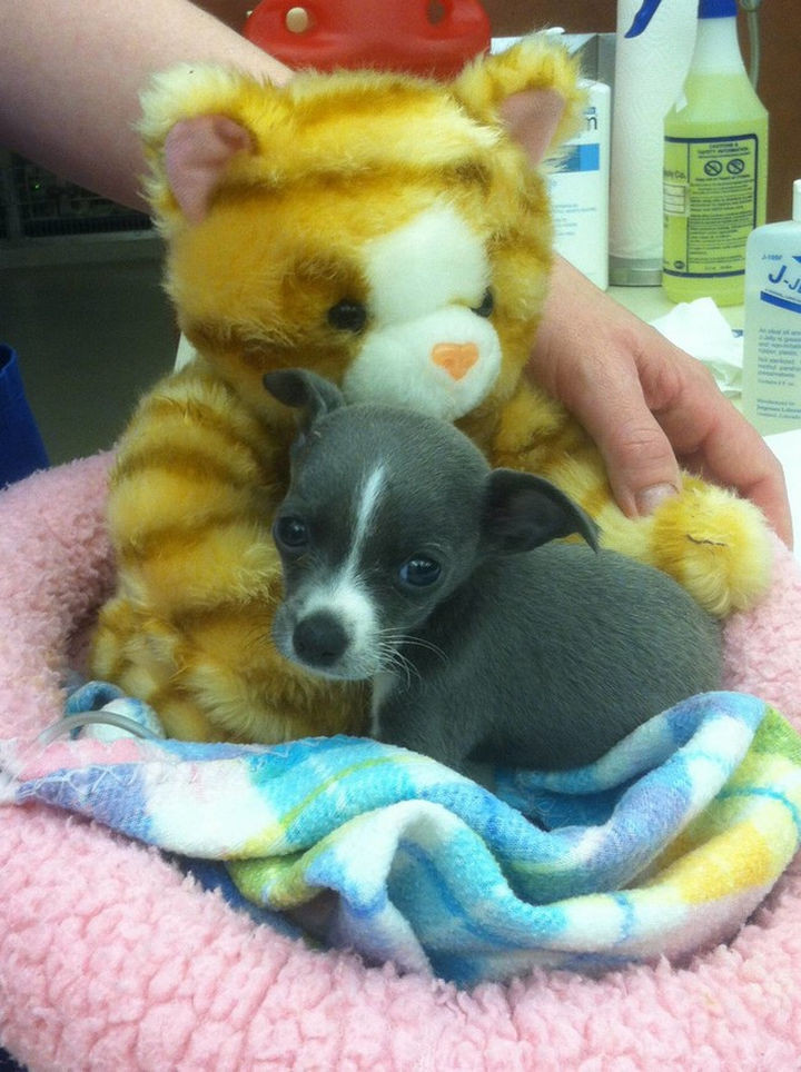 """28 Animals Going to the Vet - """"Stay by my side Mr. Bear, I'm soooo scared."""""""