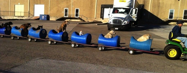 80-year-old retiree, Eugene Bostick, built a unique dog train for his 9 rescued dogs.