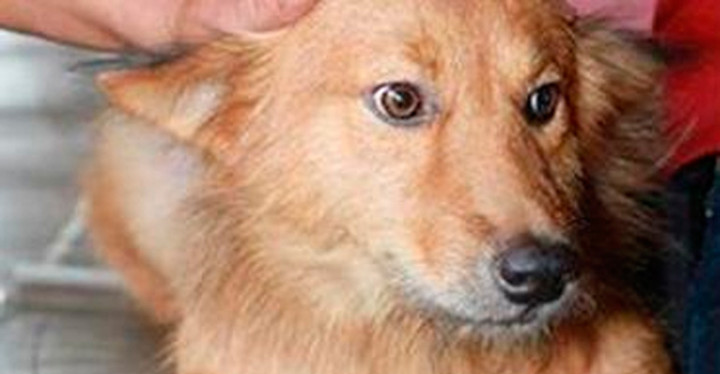 A Baby Was Left to Die in a Landfill but a Heroic Dog Saved It.