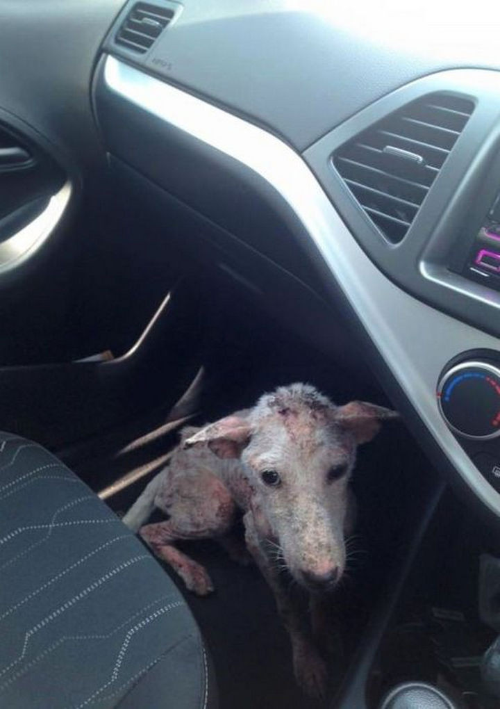 When her rescuer opened the car door, she didn't hesitate and jumped in. She knew she was finally being saved.