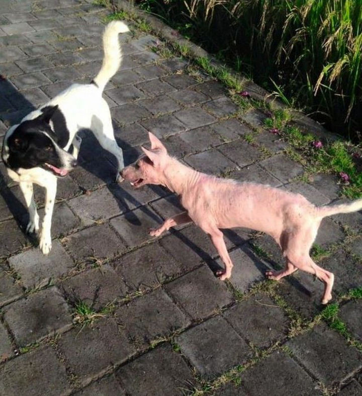 As her recovery progressed, she began getting playful again and started interacting with other dogs.