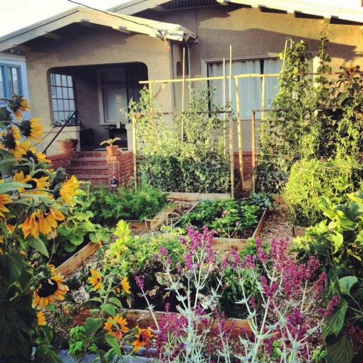 This vegetable garden bursting with fresh vegetables actually used to be a plain, regular lawn.
