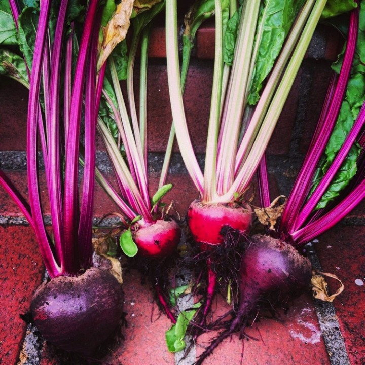 Look at the size of these beets!