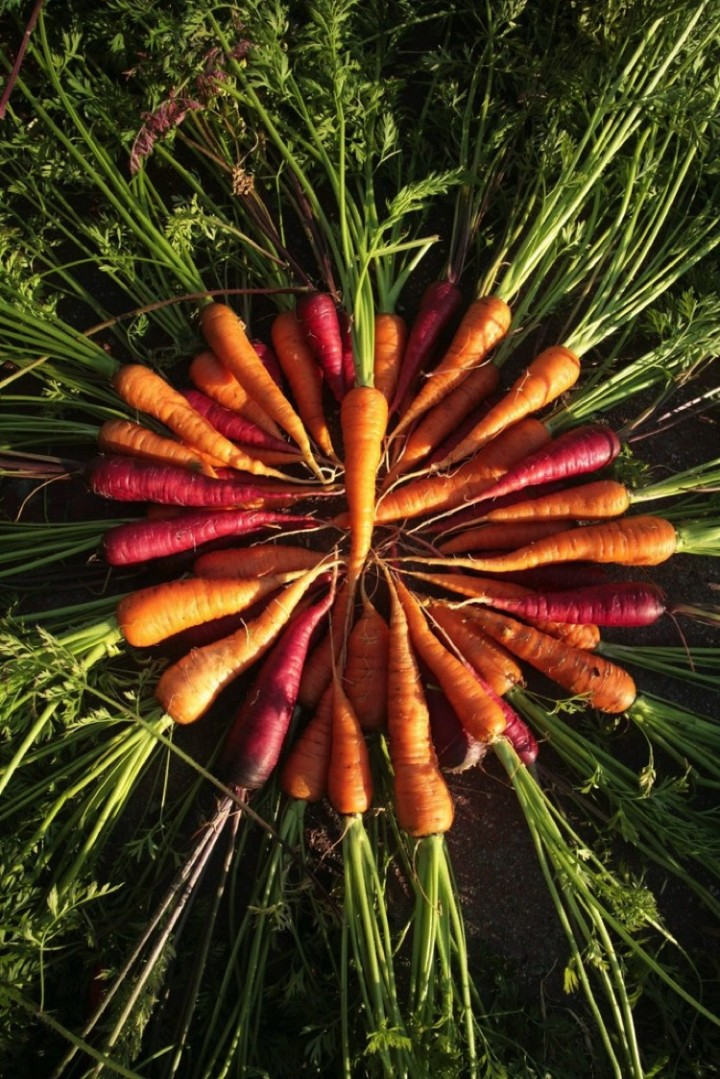 Fresh carrots are the best.