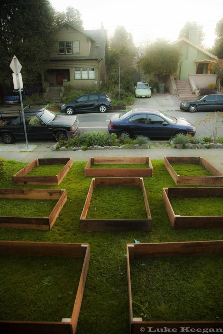 """Thehomeowner decided to """"screw the lawn"""" and build a vegetable garden instead."""