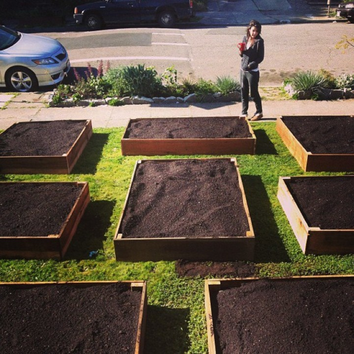 """He constructed eight 6x4 feet raised beds out of ten feet long slabs of1""""x10"""" reclaimed redwood barn siding."""