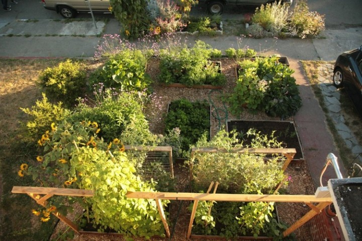 Here is how the garden looks from above.Look at all those vegetables!