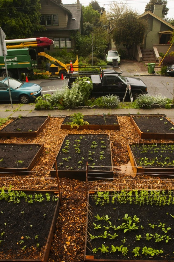 He filled them with free compost fill that the city gives away. He then started planting seeds and they sprouted quickly.