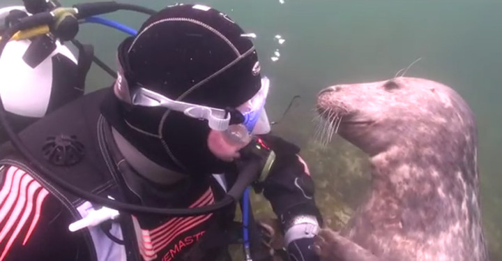 Videographer Finds Seal Who Loves Getting Belly Rubs.