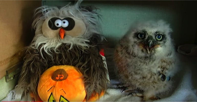 Oakley the Baby Owl Sings Along to 'Monster Mash' with BFF.