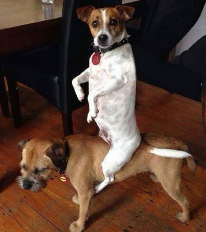 "15 Guilty Dogs Who Were Busted! - ""Aren't you so supposed to be at work?"""