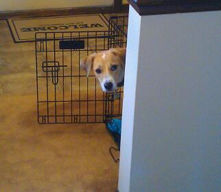 "15 Guilty Dogs Who Were Busted! - ""I couldn't have done THAT! I was here the entire time, see?"""