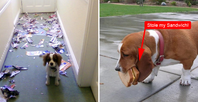 15 Guilty Dogs Who Were Caught in the Act by Their Humans.
