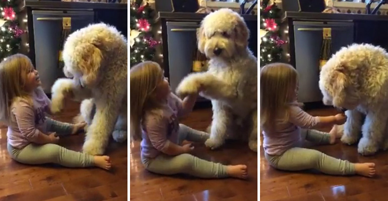 Little 3-year-old girl teaches her dog Gauge some tricks.