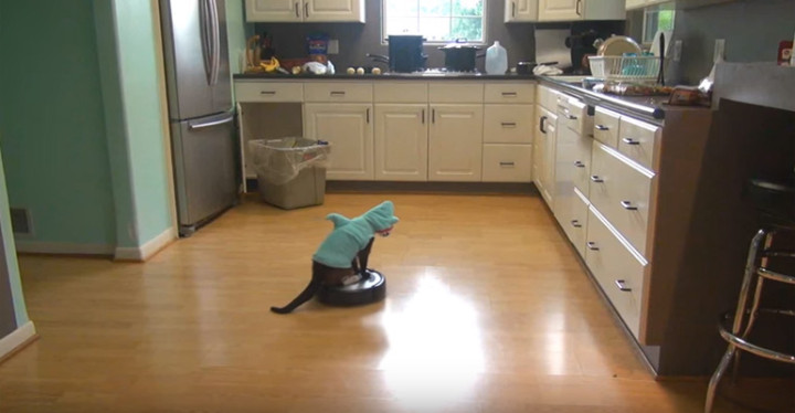Max-Arthur the Cat Wearing a Shark Costume and Riding a Roomba.