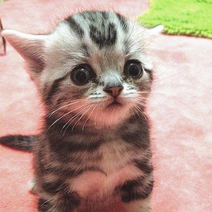 Even as a kitten, he always had worrisome eyes.