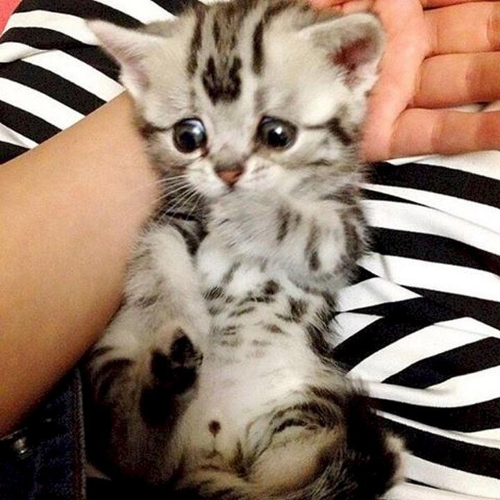 An adorable little ball of cuteness.