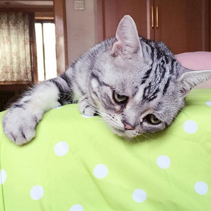 Forget grumpy cats, this sad cat is breaking the internet with his adorable face.
