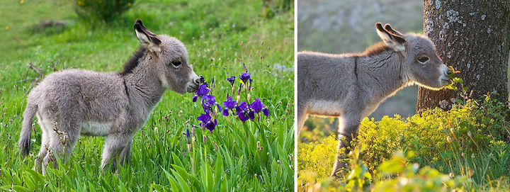 17 Adorable Animals Smelling Flowers - A young donkey enjoying a day filled with wildflowers.
