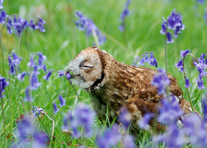 17 Adorable Animals Smelling Flowers - A happy owl surrounded by a field of bluebells.