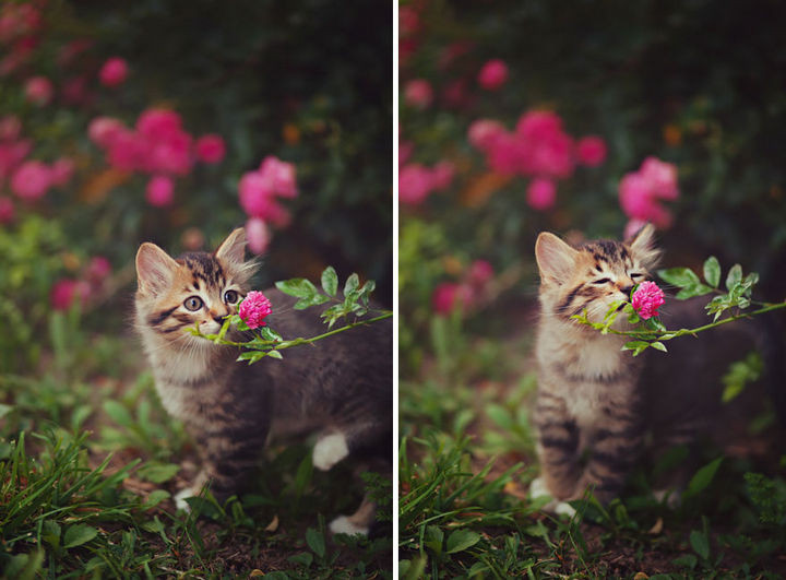 17 Adorable Animals Smelling Flowers - A tiny kitten enjoying the scent of a flower for the first time.