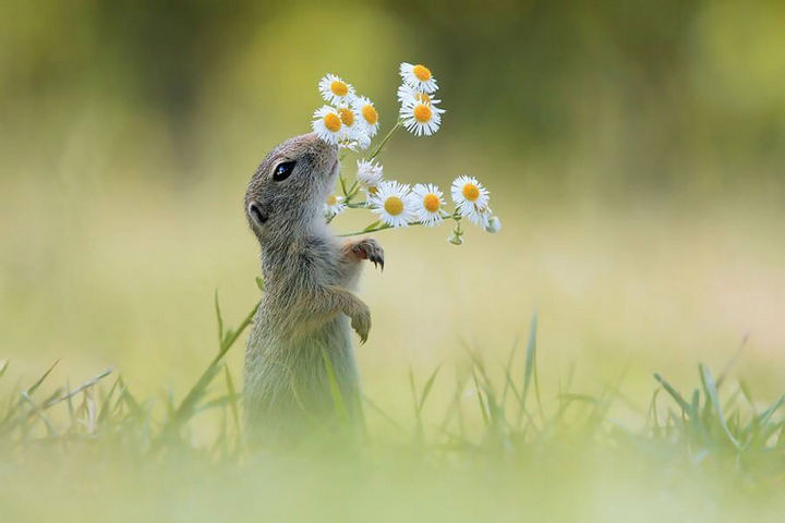 17 Adorable Animals Smelling Flowers - There is always time to take a break and smell the flowers.