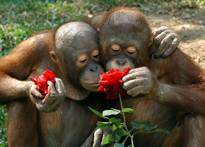 17 Adorable Animals Smelling Flowers - Spending the day together is made even more special with roses.