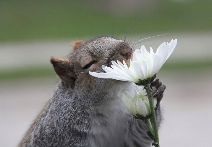 17 Adorable Animals Smelling Flowers - A squirrel enjoying the scent of wildflowers.