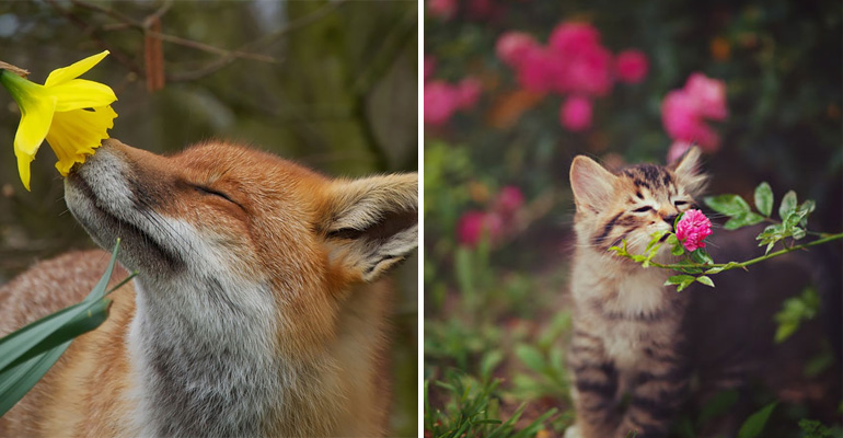 17 Adorable Animals Taking Time to Smell the Flowers.