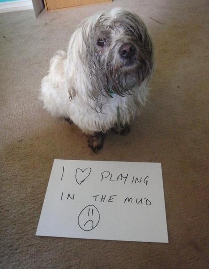 20 Things Dog Owners Will Understand - They like to have fun.