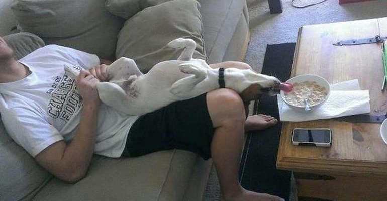 20 Cute Things Only Dog Owners Will Understand.