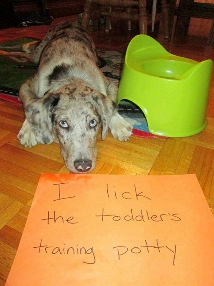 22 Dogs Being Shamed for Their Cute Crimes - That's not water!
