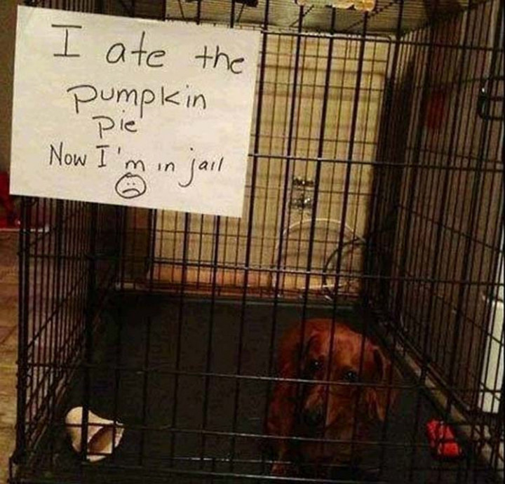 22 Dogs Being Shamed for Their Cute Crimes - It was all worth it.