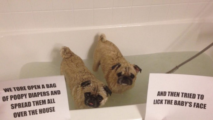 22 Dogs Being Shamed for Their Cute Crimes - Partners in dog shaming crimes.