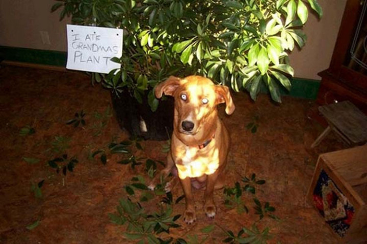 22 Dogs Being Shamed for Their Cute Crimes - He likes eating his greens.