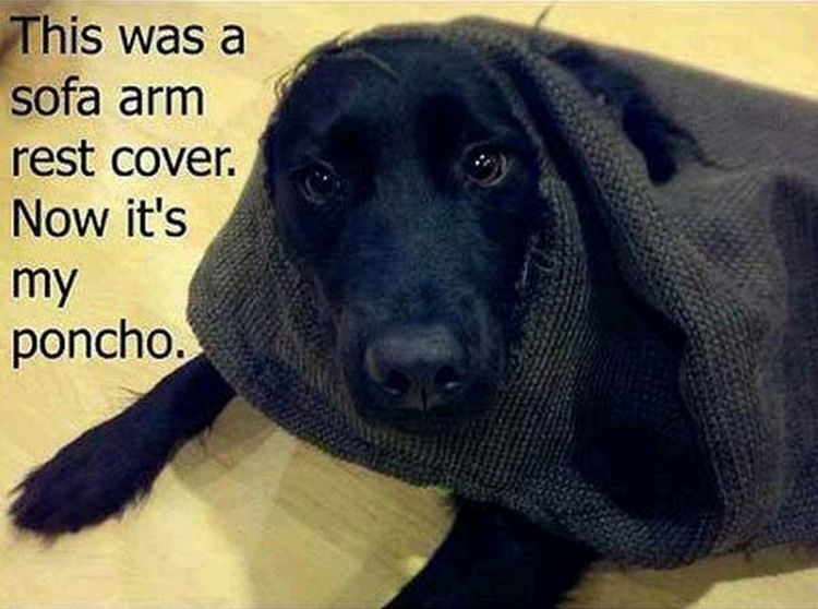 22 Dogs Being Shamed for Their Cute Crimes - A dog with style.