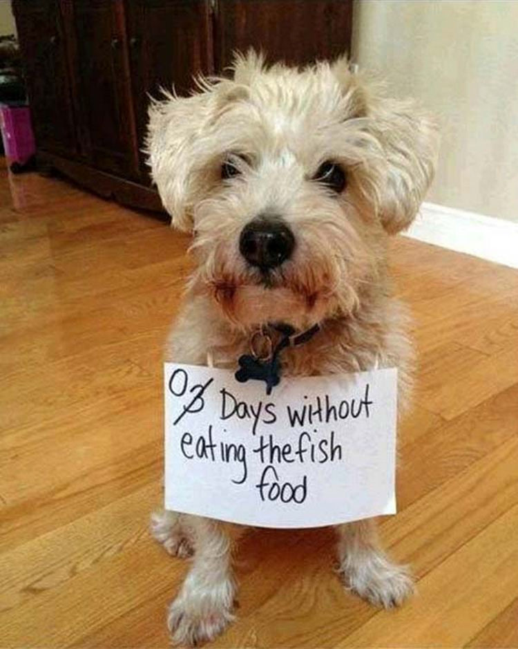 """22 Dogs Being Shamed for Their Cute Crimes - """"If it's good enough for the fish, it's good enough for me!"""""""