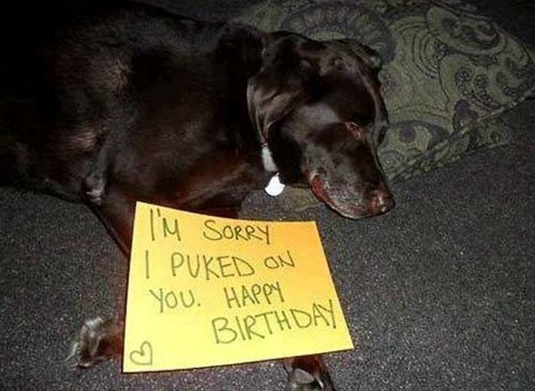 22 Dogs Being Shamed for Their Cute Crimes - Poor little fella.