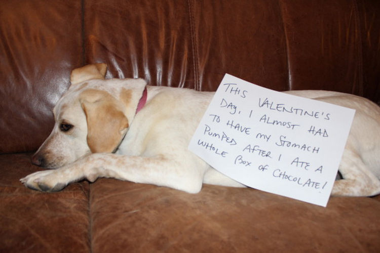 22 Dogs Being Shamed for Their Cute Crimes - Close call.