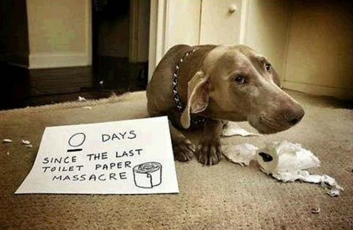 22 Dogs Being Shamed for Their Cute Crimes - His sad face says it all.