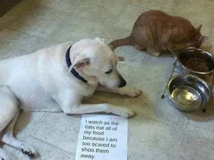 22 Dogs Being Shamed for Their Cute Crimes - Bullied by the cat.