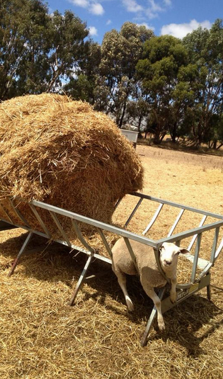 35 Photos of Animals Stuck in the Weirdest Places - He might as well take a nap...