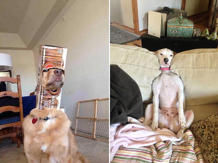 35 Photos of Animals Stuck in the Weirdest Places - These dogs are pretendingnothing happened.