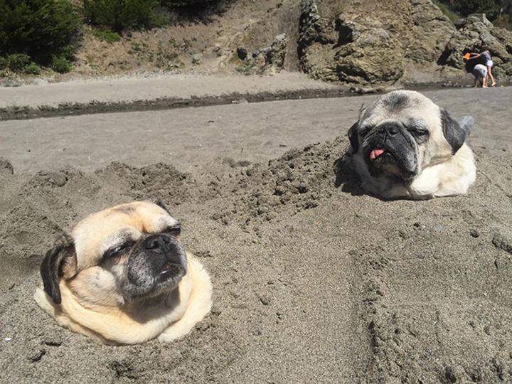 35 Photos of Animals Stuck in the Weirdest Places - I think they lost a bet at the beach.
