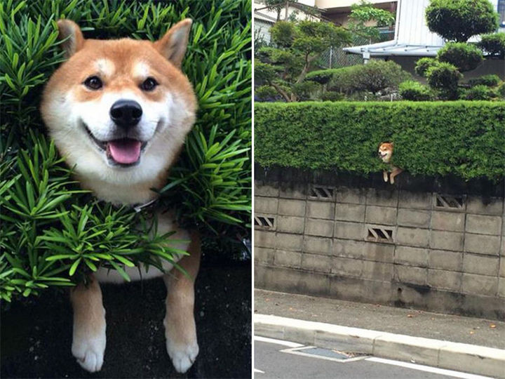 35 Photos of Animals Stuck in the Weirdest Places - Even when you're stuck, keep smilin'.