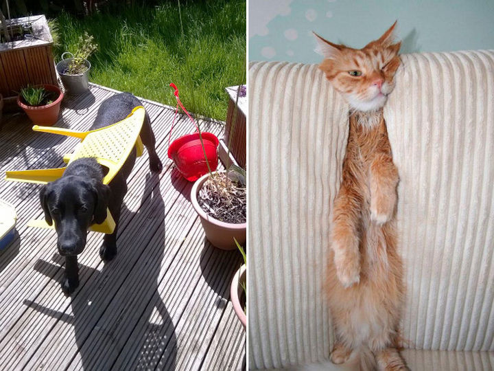 35 Photos of Animals Stuck in the Weirdest Places - I think they're busted.